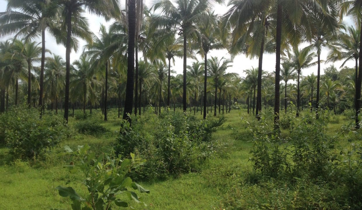 Riverside Farmhouse with 99 acres Orchard land for sale in Maina Quepem