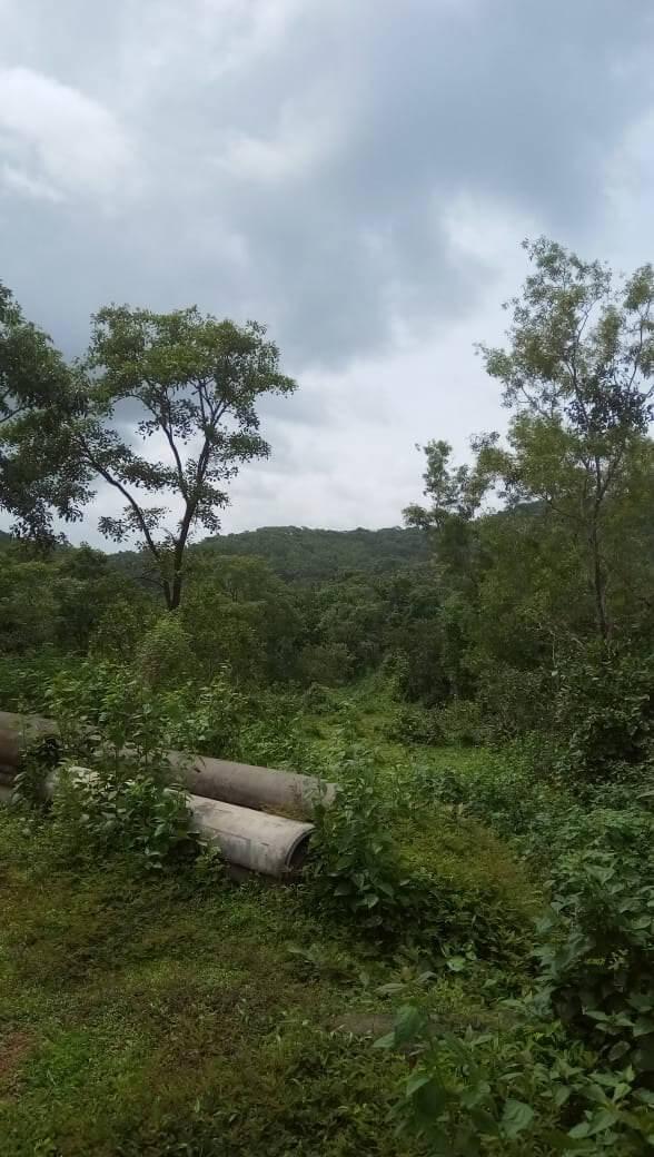 11 acres Land in Sodiem Siolim 44 crores
