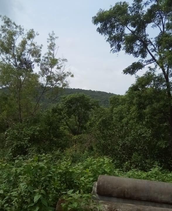 Settlement Sanad Land in Soidem Siolim